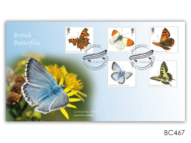 Butterflies - The Chalkhill Blue