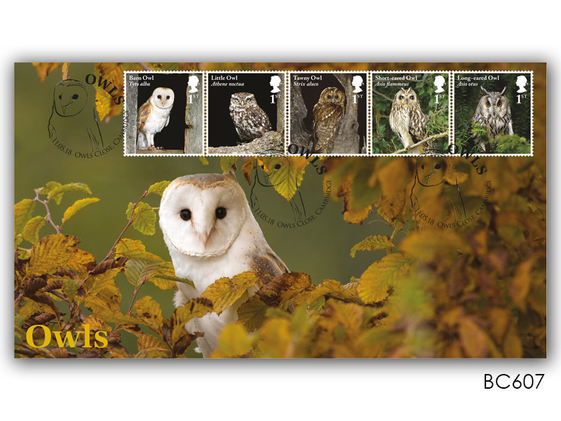 Celebrating British Owls - Adult Barn Owl