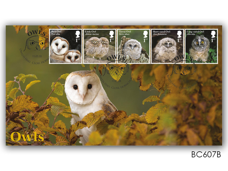 Celebrating British Owls - Adult Barn Owl with Owlet Stamps Alternative Cover